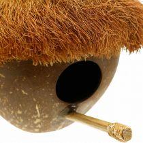 Coconut as a nesting box, birdhouse to hang, coconut decoration Ø16cm L46cm