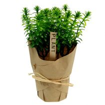 Herbs in the pot 16cm green