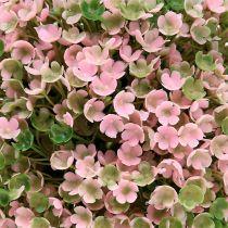 Ball plant pink-green Ø18cm 1p