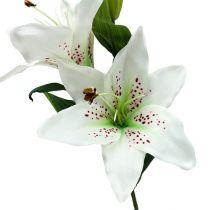Lily white 66cm