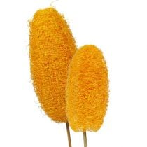 Loofah on a stick golden 25pcs