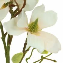 Magnolia peach 85cm