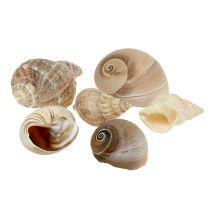Maritime decoration shell mix natural 400g