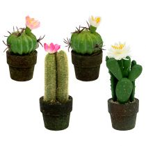 Mini cactus with flowers H9-12cm 4pcs