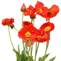 Poppy orange 60cm 3pcs