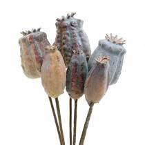 Artificial poppy capsules yellow, brown 6pcs