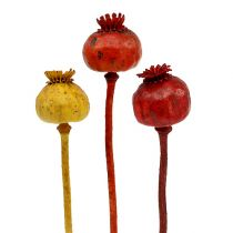 Poppy heads assorted 3 colors 100pcs