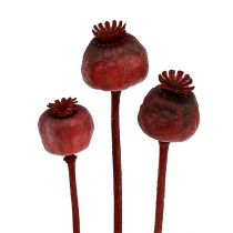 Poppy heads dyed red 100p