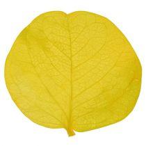 Moneta leaves lime 50gr