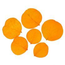 Monetablätter golden yellow 50g