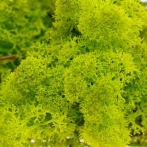 Decorative moss light green reindeer moss preserved handicraft material 400g
