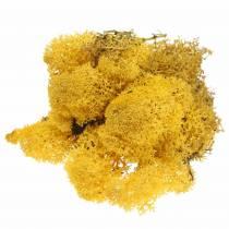 Moss reindeer moss yellow 500g
