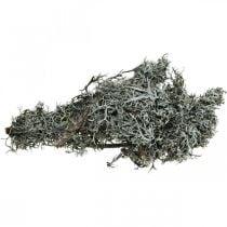 Decorative twigs Lichen twigs Moss twigs Lichen Naturdeko 750g