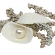 Shell mix with pearl and wood white 200g