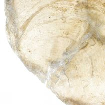Beach decorations, Capiz shells 5–10cm, natural items, mother-of-pearl, maritime 1kg