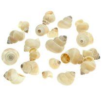 Umachi mussels 500g