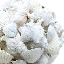 Shell ball white Ø10cm
