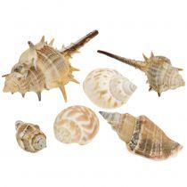Musselmix Natur sorted 260g