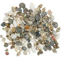 Deco snail shell mini nature mix maritime decoration 1kg