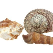 Shell mix for maritime decoration nature 400g