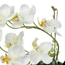 Orchid Phalaenopsis to hanging H26cm cream
