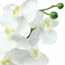 Orchid white 77cm