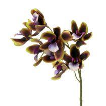 Orchid Cymbidium Green, Purple L38cm 4pcs
