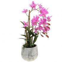 Orchid in Pot Violet H55cm