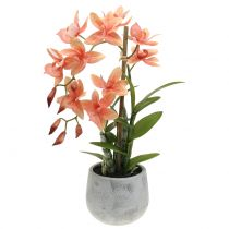 Orchid in pot salmon H41cm