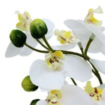 Orchids in a pot 30cm white