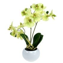 Orchids in pot green H30cm