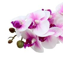 Orchid branch White-Pink L58cm