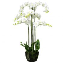 Orchid White on Earth Bale 118cm