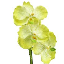 Orchid with roots light green L43cm