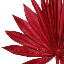 Palmspear Sun mini red 50p