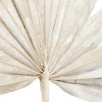 Palmspear Sun mini white washed 50pcs