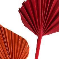 Palmspear assorted red / orange 50pcs