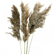Dried pampas grass natural For drying bouquet 70-75cm 6pcs