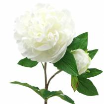 Peony white 72cm