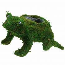 Planter frog with moss green 35 × 25cm H21cm