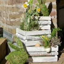 Planter wooden box white washed 37/31 / 25cm set of 3