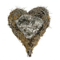 Plant heart of vine and moss nature 20cm x 14cm