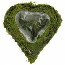 Plant heart vine, moss 22cm x 20cm H7cm