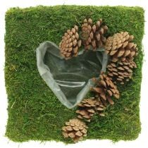 Plant cushion heart moss and cones square 25 × 25cm