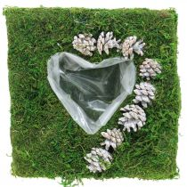 Plant cushion heart moss and cones, washed white 25 × 25cm