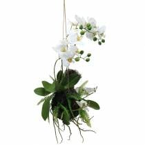 Orchid with fern and moss bales for hanging Artificial 64cm