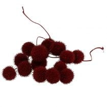 Plane fruits dried dark red 250g
