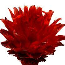Plumosum 1 red 25p