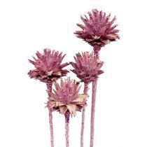 Leucospermum 1 blackberry frozen 25pcs