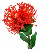 Protea Artificial Red 73cm